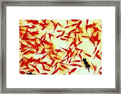 Goldfishscape Framed Print