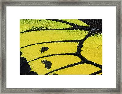 Goliath Birdwing Butterfly Wing Framed Print by Konrad Wothe