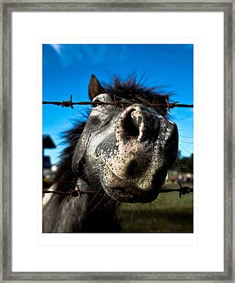Framed Print featuring the photograph Golly A Curious Horse by Carole Hinding