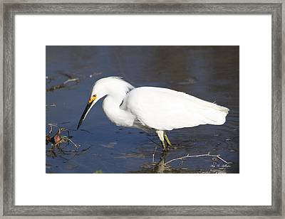 Framed Print featuring the photograph Gone Fishing  by Amy Gallagher