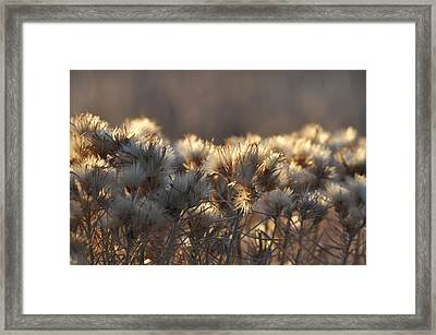 Framed Print featuring the photograph Gone To Seed by Fran Riley