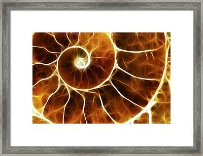 Goniatite Fossil, Computer Artwork. Framed Print