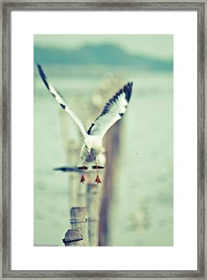 Gonna Landing Now Framed Print by Kornrawiee Miu Miu