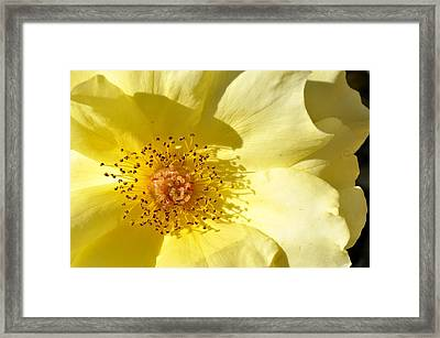 Good Day Sunshine Framed Print by Sandy Fisher