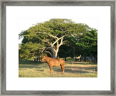 Good Horse At Dawn  Framed Print by Laurel Fredericks