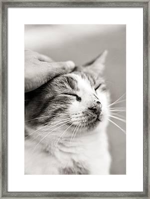 Good Kitty Framed Print by Laura Melis