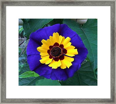 Good Looking So Refined  Framed Print by Eric Kempson