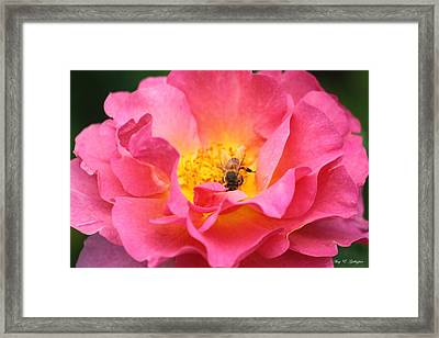 Framed Print featuring the photograph Good Morning  by Amy Gallagher