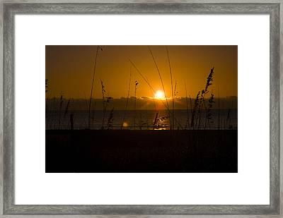 Good Morning Framed Print by Cindy Rubin