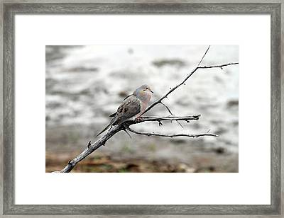 Framed Print featuring the photograph Good Morning Dove by Elizabeth Winter