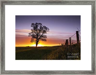 Good Morrow Framed Print by Tom Migot