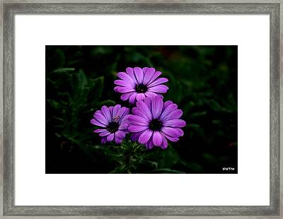 Good Things Come In Three's Framed Print