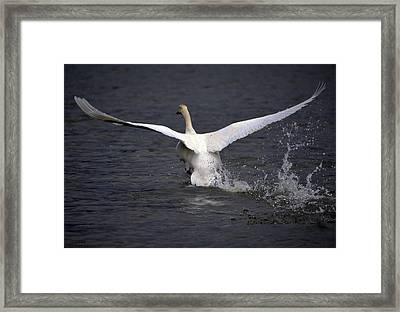 Goodbye Framed Print by Brian Stevens