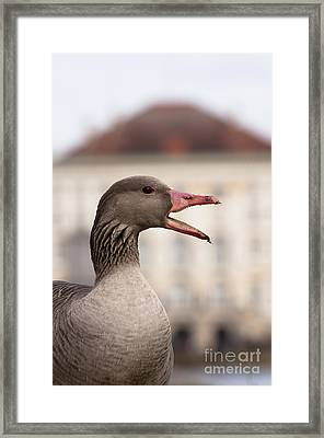 Goose At Nymphenburg Palace Framed Print by Andrew  Michael