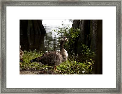 Goose Framed Print by Christina Durity