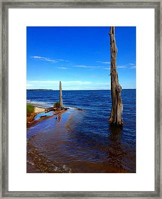 Goose Creek State Park Framed Print by Joan Meyland