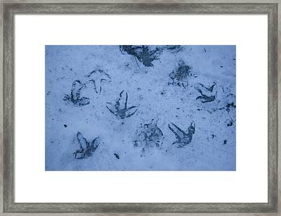 Goose Footprints In The Ice Framed Print by Joel Sartore