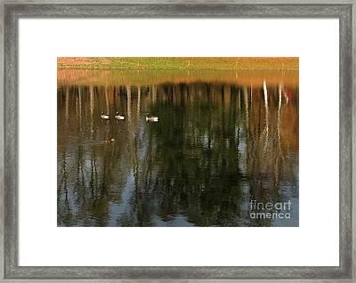 Goose Goose Duck Goose Framed Print by Trish Hale