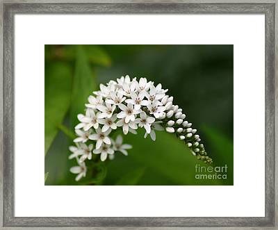 Gooseneck Flowers And Buds Framed Print