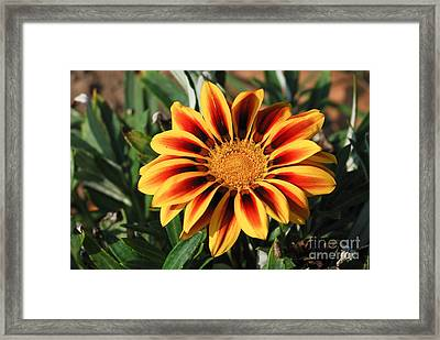 Framed Print featuring the photograph Gorgeous Beauty by Fotosas Photography