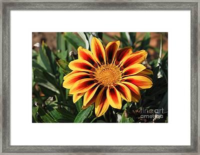 Gorgeous Beauty Framed Print