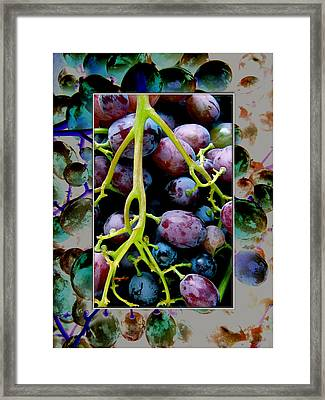 Gorgeous Bunch Of Grapes Framed Print by John Maloof