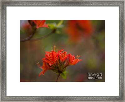 Gorgeous Cluster Framed Print by Mike Reid