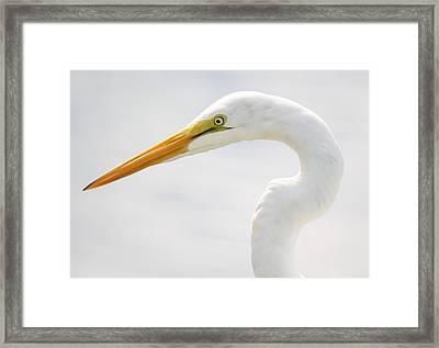 Gorgeous Great White Egret Framed Print by Paulette Thomas