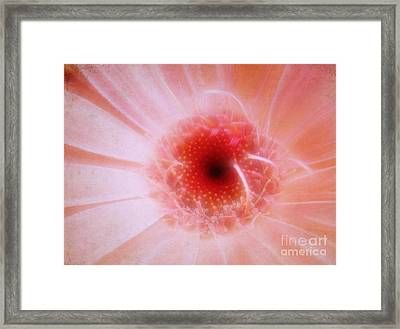 Gossamer Framed Print by Judi Bagwell