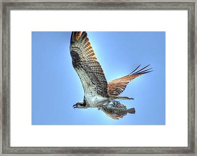 Got It Framed Print by Barry R Jones Jr