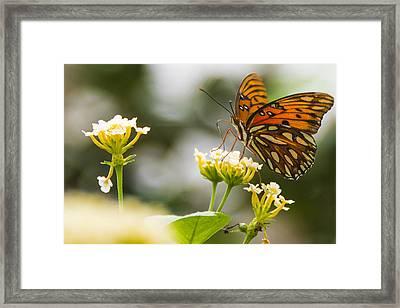 Got Pollen Framed Print