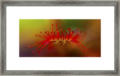 Got Ya Framed Print by Charles Dana