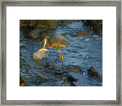 Framed Print featuring the photograph Gotcha by Brian Wright
