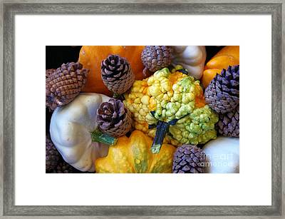 Framed Print featuring the photograph Gourds 5 by Deniece Platt