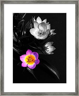 Grabbing The Spotlight Framed Print