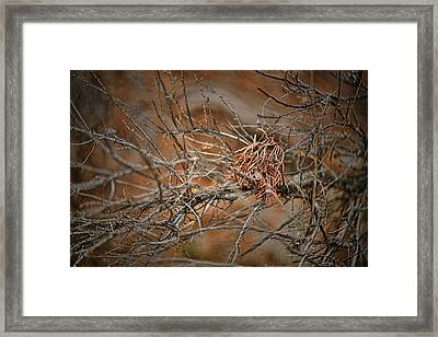 Grace To Endure Framed Print by Bonnie Bruno
