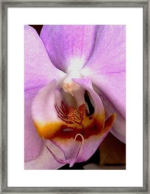 Graceful Bird Orchid Framed Print