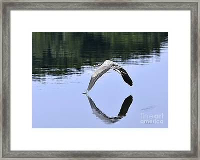 Framed Print featuring the photograph Graceful Heron by Nava Thompson