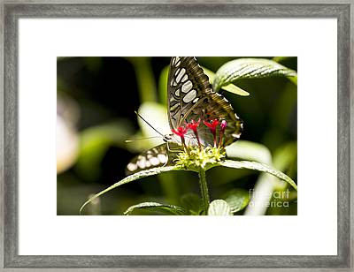 Graceful Framed Print by Leslie Leda