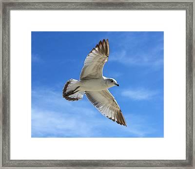 Graceful Seagull Framed Print