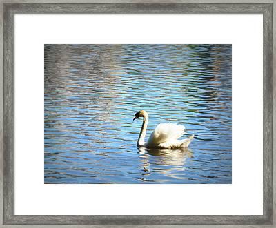 Graceful Solitude Framed Print