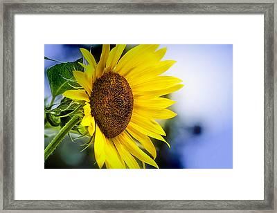 Graceful Sunflower Framed Print