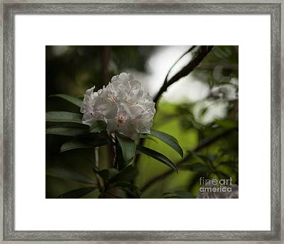 Gracefully Lit Framed Print by Mike Reid