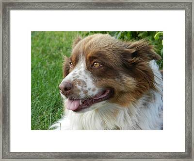 Gracy Lady In Color Framed Print by Nicole Steele