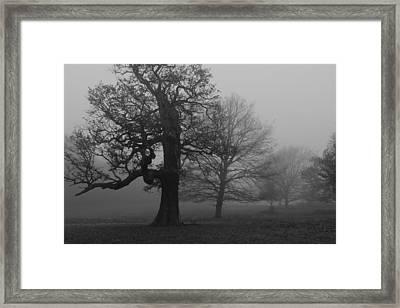 Framed Print featuring the photograph Gradual Trees by Maj Seda