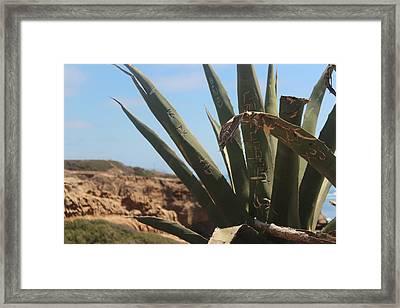 Graffiti Cactus Framed Print by Martin Krizik