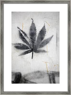 Graffiti Of A Marijuana Leaf Framed Print by David Evans