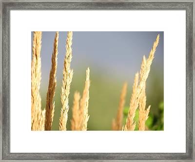 Grain Framed Print by Don Barnes