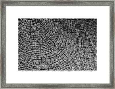 Detail Of Wood Grain Framed Print