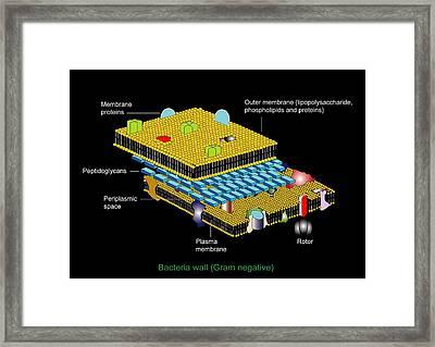 Gram Negative Cell Wall, Artwork Framed Print by Francis Leroy, Biocosmos